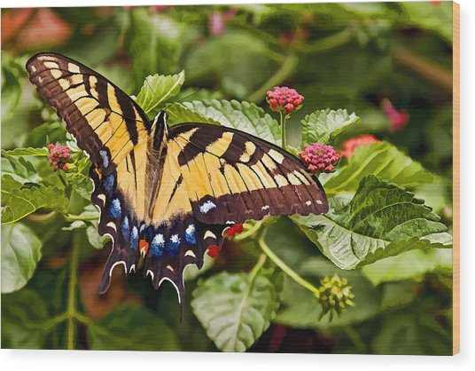 Swallowtail Beauty Wood Print