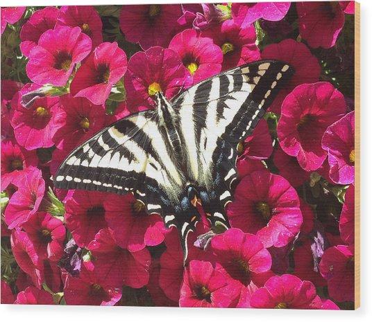 Swallowtail Butterfly Full Span On Fuchsia Flowers Wood Print