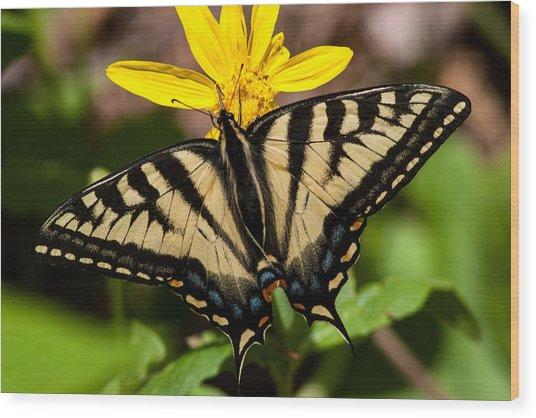 Swallowtail Butterfly Wood Print