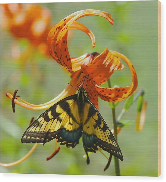 Swallowtail Butterfly3 Wood Print