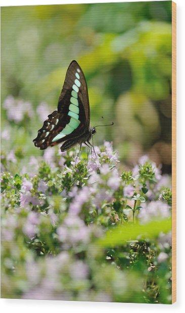 Swallowtail Butterflygraphium Sarpedon Wood Print by Myu-myu