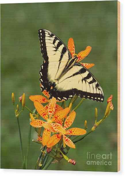 Swallowtail Delight Wood Print
