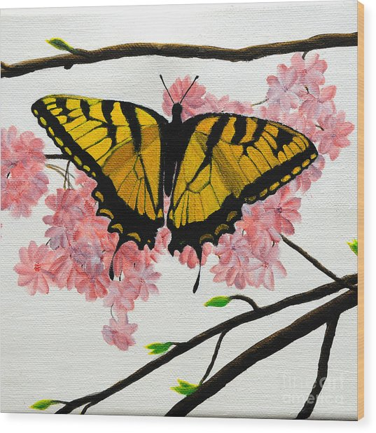 Swallowtail In Cherry Blossoms Wood Print