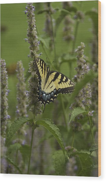 Swallowtail In Flower Field Wood Print