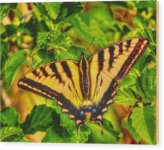 Swallowtail Wood Print by Larry Bodinson