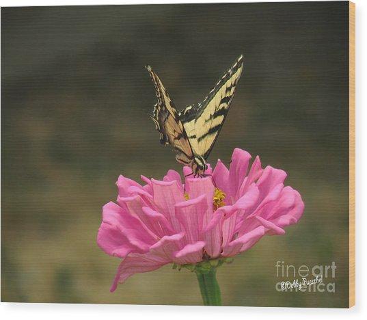 Swallowtail On A Zinnia Wood Print