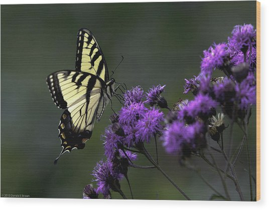 Swallowtail On Purple Wood Print