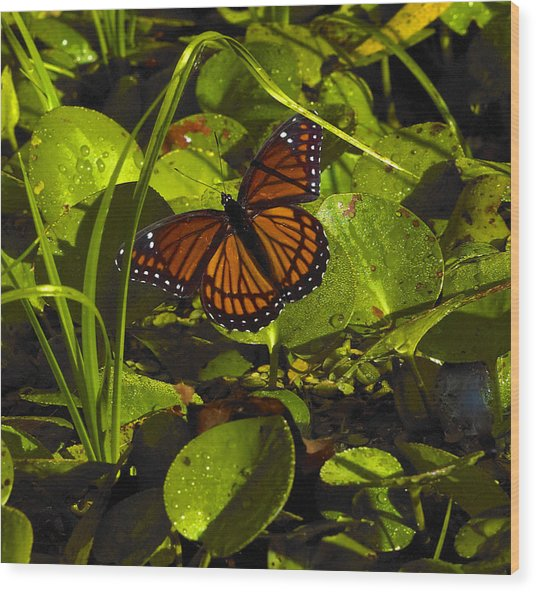 Swamp Butterfly Wood Print