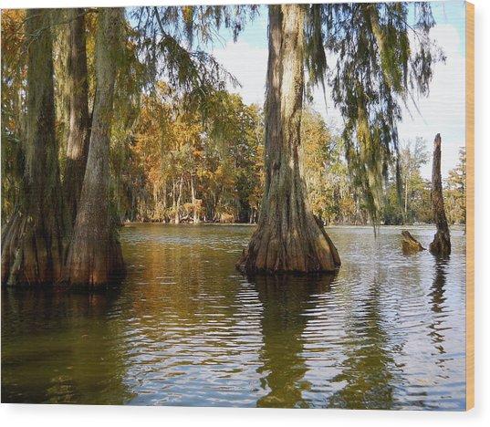 Swamp - Cypress Trees Wood Print