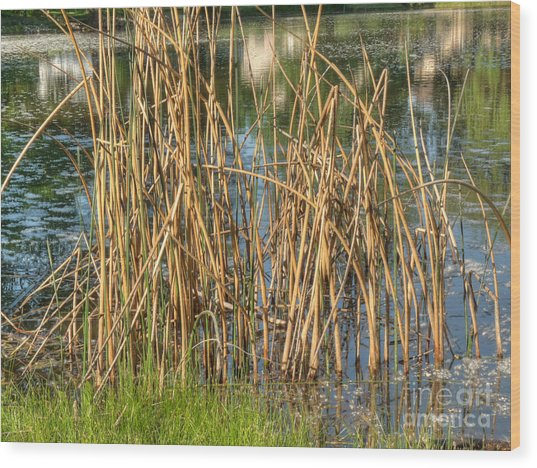 Swamp Grass Wood Print by Deborah Smolinske