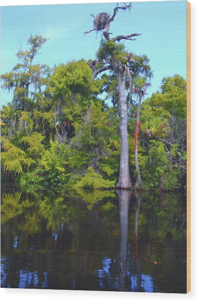 Swamp Land Wood Print
