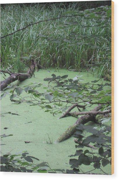 Swamp Wood Print