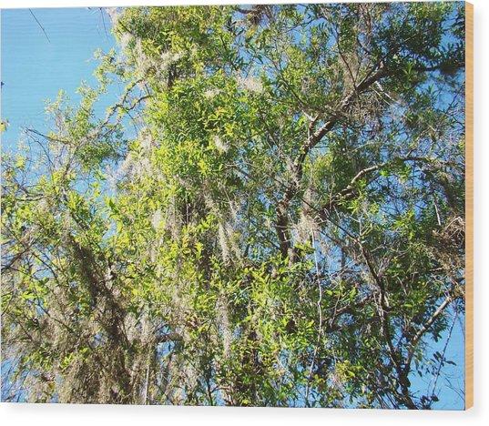 Swamp Tree Hugger Wood Print by Van Ness