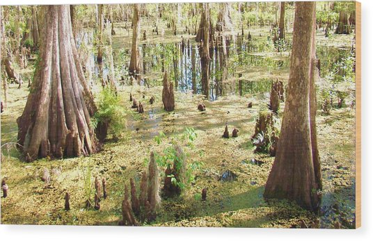 Swamp Wading 6 Wood Print by Van Ness
