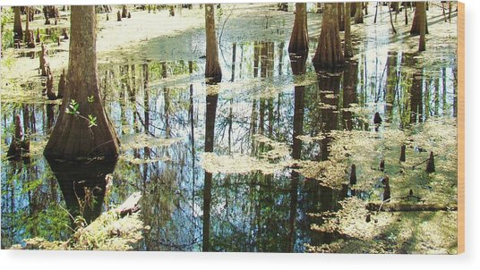 Swamp Wading 5 Wood Print by Van Ness