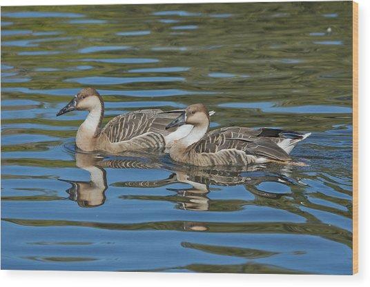 Swan Geese Wood Print