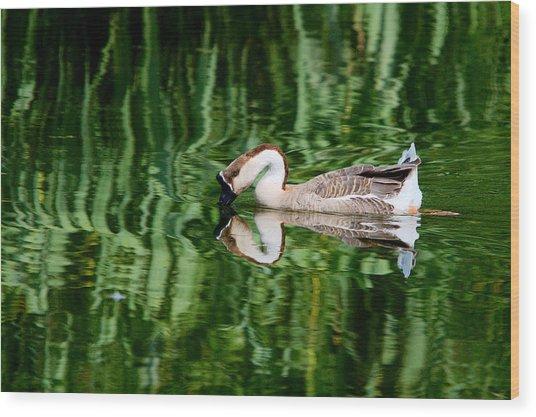 Swan Goose And Emerald Green 1 Wood Print