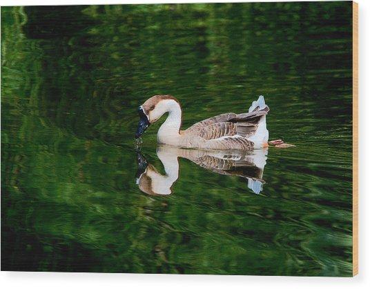 Swan Goose And Emerald Green 3 Wood Print