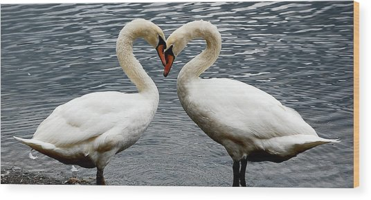 Swan Heart 2 Wood Print