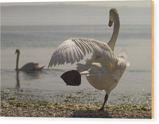 Swan Lake Wood Print by Karim SAARI