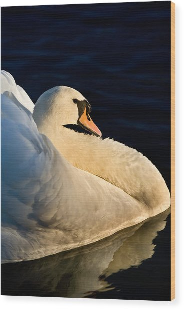 Swan On Lake Wood Print