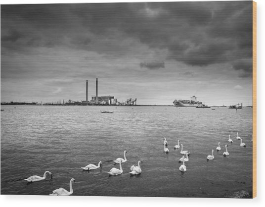 Swans And Ships. Wood Print by Gary Gillette