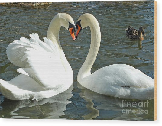 Swans At City Park Wood Print