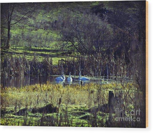 Swans Wood Print by Gloria De los Santos