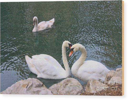 Swans In Love Wood Print by Lidia Anderson