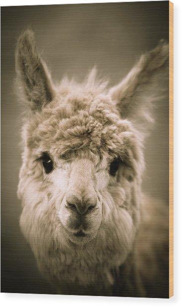 Sweet Alpaca Wood Print