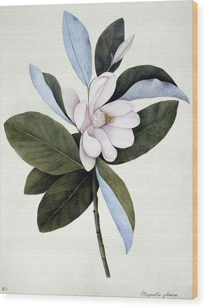 Sweet Bay (magnolia Virginiana) Wood Print