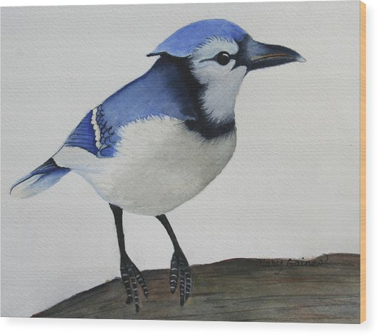 Sweet Blue Jay Wood Print by Mary Gaines