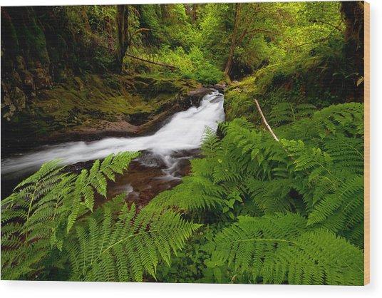 Sweet Creek Ferns Wood Print