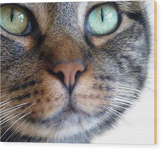 Sweet Green Eyes Wood Print