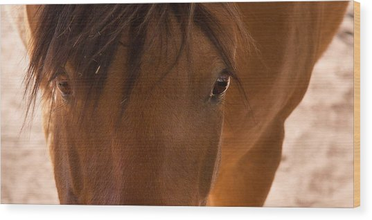 Sweet Horse Face Wood Print