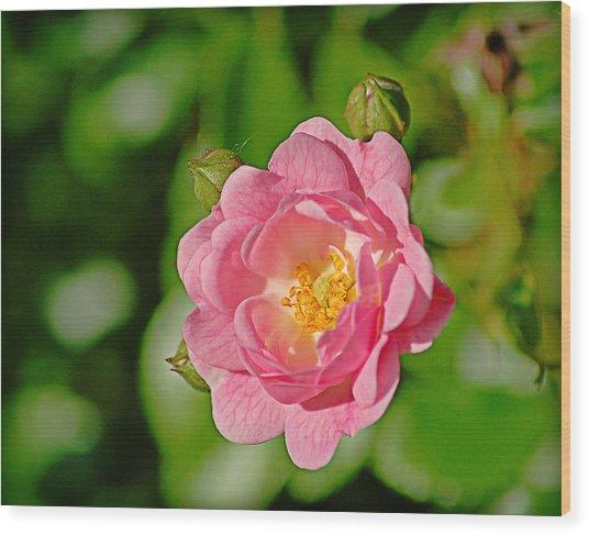 Sweetheart Rose Wood Print