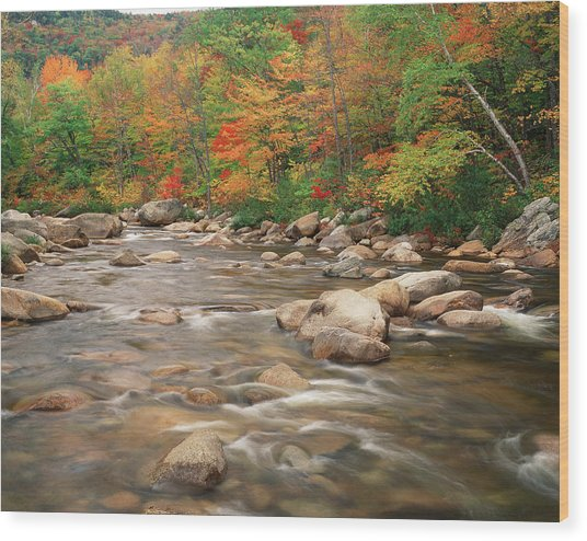 Swift River In Autumn, White Mountains Wood Print