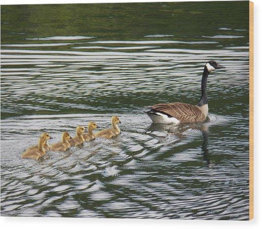 Swimming Lesson Wood Print by Jane Munroe