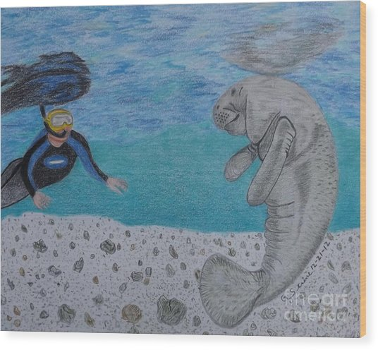 Swimming With The Manatee Wood Print
