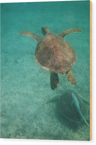 Swimming With Turtles Wood Print
