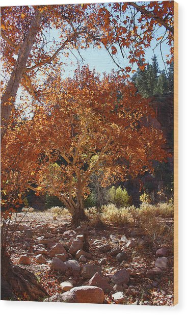 Sycamore Trees Fall Colors Wood Print