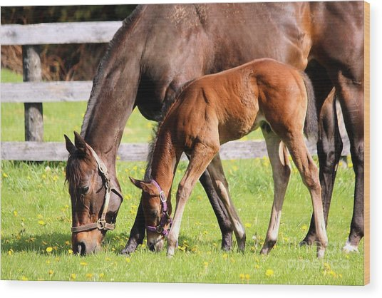 Sychronized Mare And Foal Wood Print