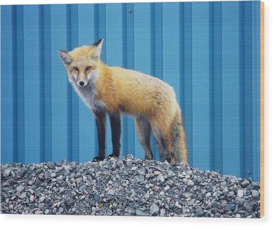 Sydney Fox Wood Print