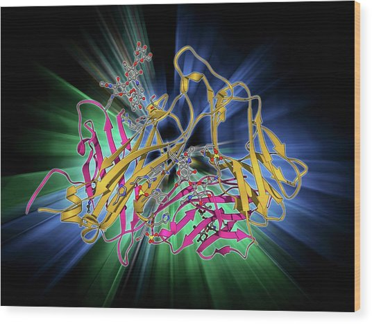 T Cell Receptor Wood Print