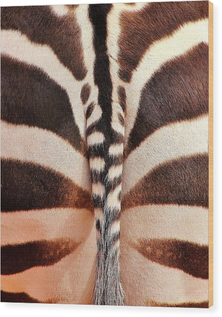 Tailing A Zebra Wood Print