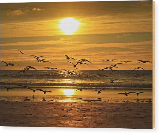 Take Flight At Sunset Wood Print by Donna Pagakis