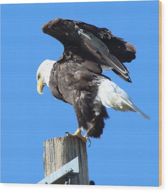 Taking Flight Wood Print by Jeff Nelson