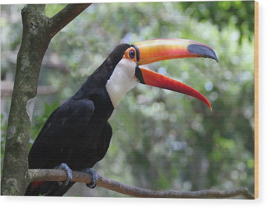 Talkative Toucan Wood Print