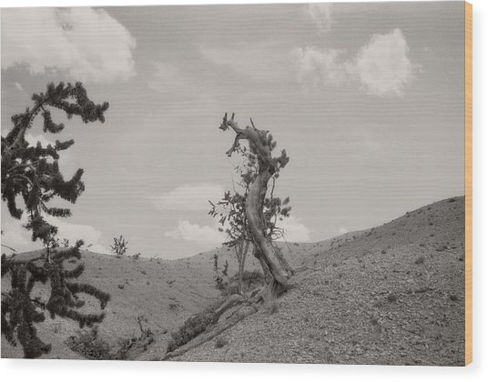 Talking Trees In Bryce Canyon Wood Print