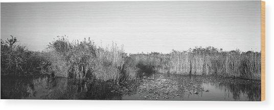Tall Grass At The Lakeside, Anhinga Wood Print